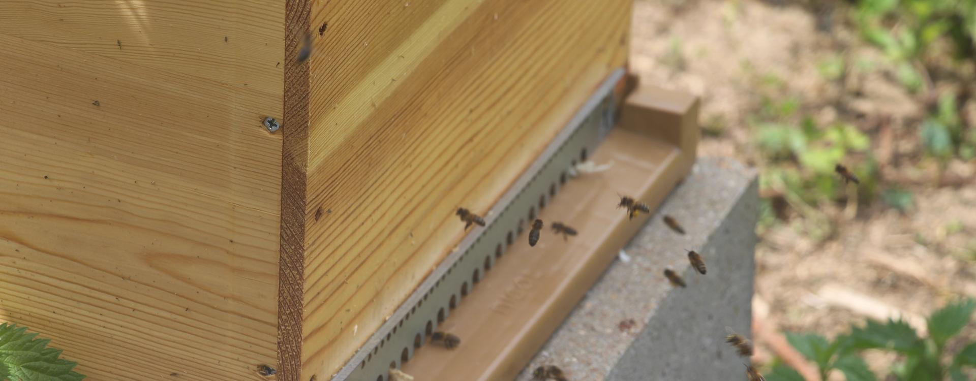 abeille5-1920x750